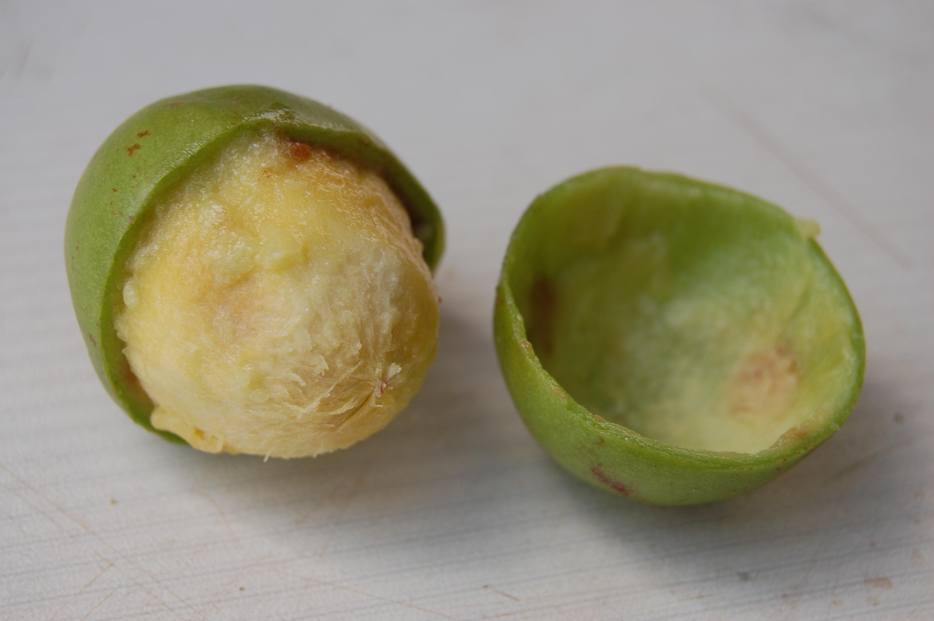 Sheafrucht mit Fruchtfleisch